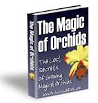 The Magic of Orchids