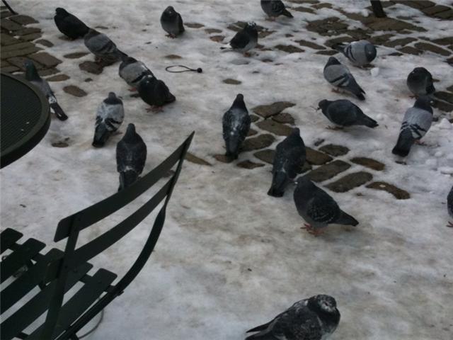 [pigeons2.aspx]