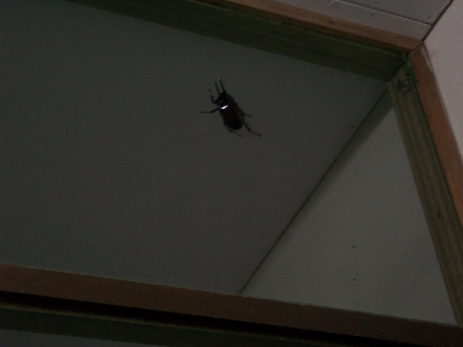 Diari africani l arrivo for Formiche volanti in casa