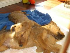 Gemma Sleeping on Benny