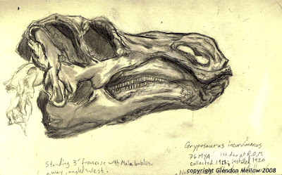 The Flying Trilobite: Art Monday: Gryposaurus skull sketch