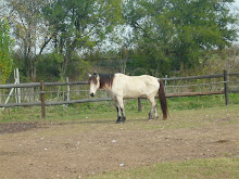 El caballo del Gaucho de areco