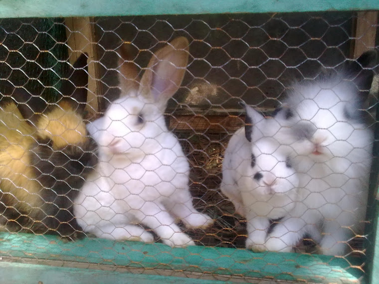 my rabbit: mimi, vita, denis and fadhel :)