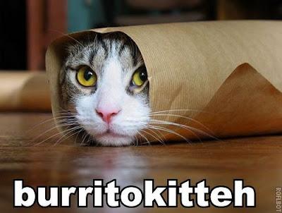 Lolcat Lolcats Lolcatz Lowlcatz burrito kitty cool,