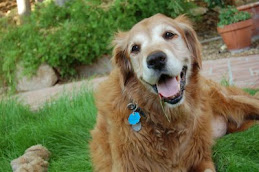 Riley lived 14 great years