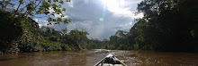 Amazonia contiene un quinto del agua dulce del mundo
