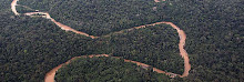 7 campos de futbol son deforestados cada minuto