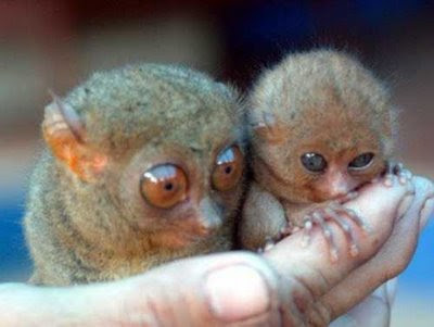Hewan Hewan terlucu dan terimut.. :) Cutest_smallest_animals_01_preview