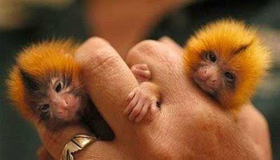 Hewan Hewan terlucu dan terimut.. :) Cutest_smallest_animals_10_preview
