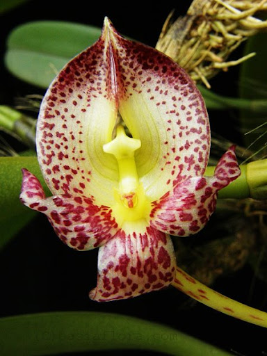 กล้วยไม้ชนิดต่าง ๆ (Orchids species)