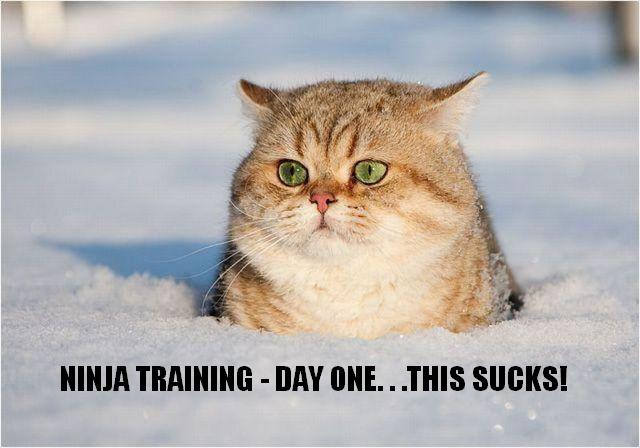 funny animals with captions pictures. Animal captions du jour.