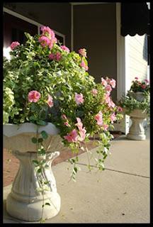 Грешки при отглеждането на цветята. Home-flowers