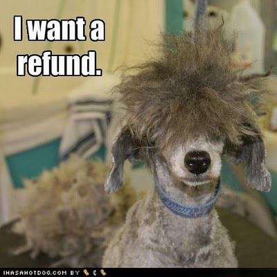 funny and crazy dogs haircuts