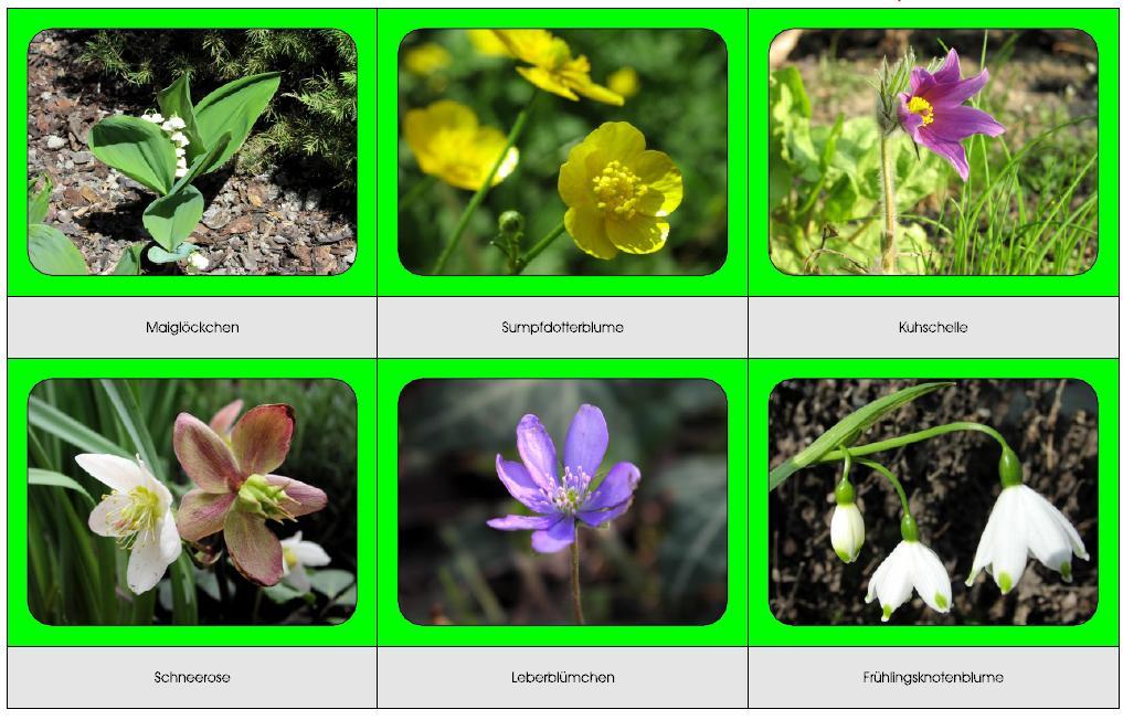 olika blommor namn