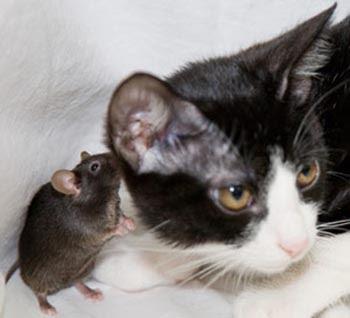 EL GATO Y EL RATÓN Raton_gato_miedo_fotodeldia