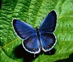 """""""La mariposa recordará por siempre que fue gusano"""" Mario Benedetti."""