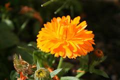 """""""La terra és insultada, i ofereix les seves flors com a resposta"""" Tagore."""