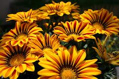 """""""L'amistat es cultiva com una flor, s'abona amb detalls de tendresa i de lleialtat, i es rega..."""