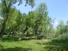 """""""Si vols saber de paciència i de fortalesa, freqüenta la companyia dels arbres""""."""