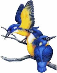 """""""Es diu que els ocells no canten perquè estan contents, sinó que canten per estar contents"""""""