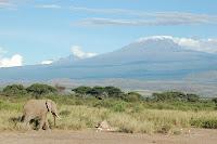 elefante Elephant monte Kilimanjaro tanzania africa