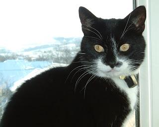 Molly in Febuary 2004 hiding on a windowsill