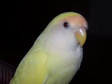 "<a href=""http://www.birdchannel.com/blog/viewbio.aspx?apid=13357"">Sierra (Breeder Female)</a>"