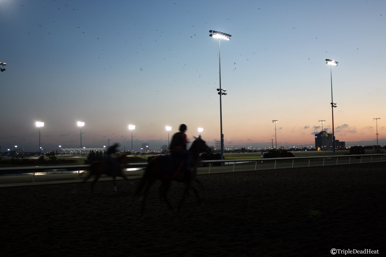 triple dead heat photo essay chasing stories across ontario squinting silhouette