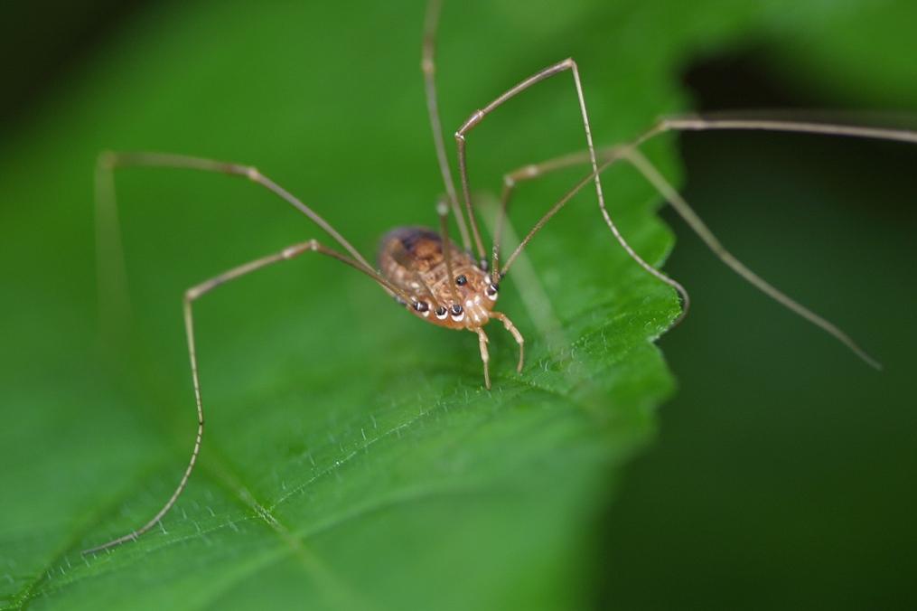 vertebrates and invertebrates. Invertebrate- Athropod-