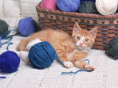 Kittens and yarn (or thread). Narrated by Joy Renee at 8:33 PM