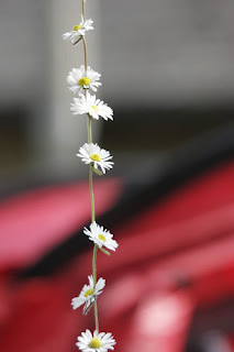 Image of a flower daisy-chain - by masochismtango on Flickr.