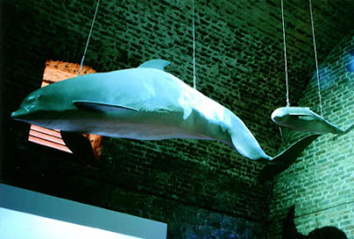 Kay Moore designed dolphin - suspended from the ceiling of a brick building.
