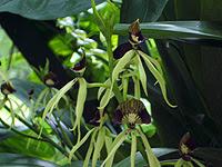 Pollination (MBG)