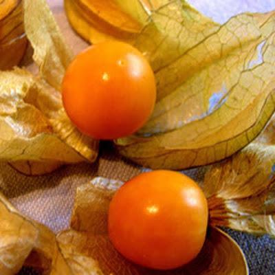 Physalis fruta preço
