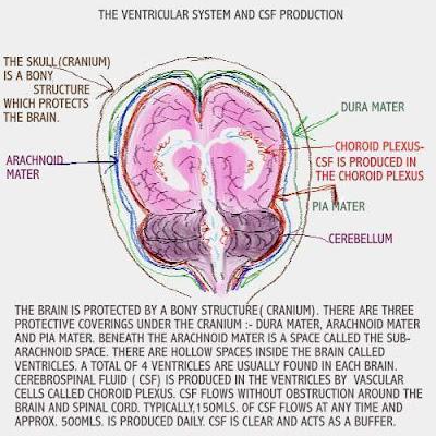 viral meningitis symptoms in adults