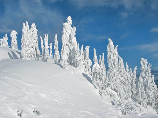 Snow Cover Trees Nature HD Wallpaper