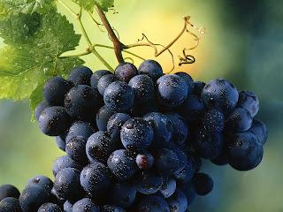 Grapes Fruit Nature HD Wallpaper