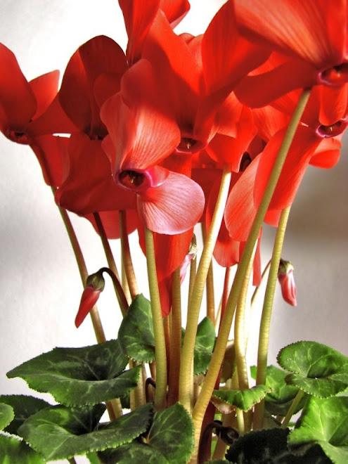 flores que gosto...
