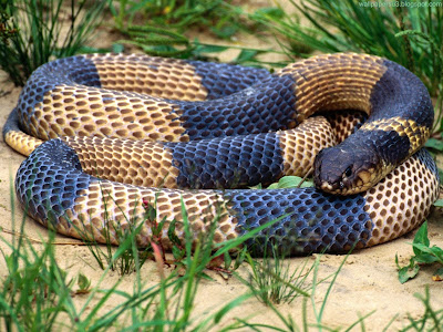 Snake Standard Resolution Wallpaper 7