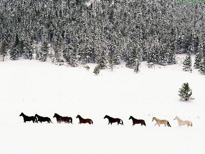 Horse Standard Resolution wallpaper 6