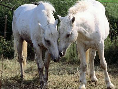 Horse Standard Resolution wallpaper 5