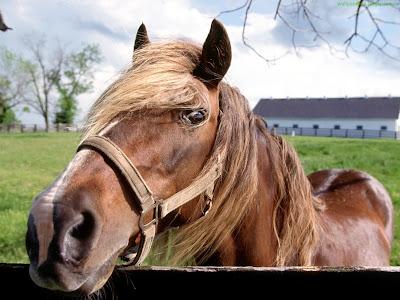 Horse Standard Resolution wallpaper 3