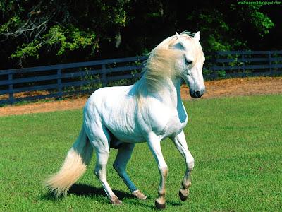 Horse Standard Resolution wallpaper 19
