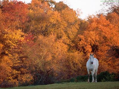 Horse Standard Resolution wallpaper 13