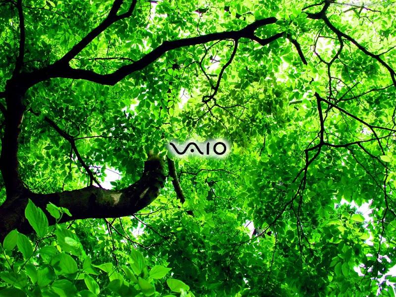 Sony VAIO Widescreen Wallpaper 13