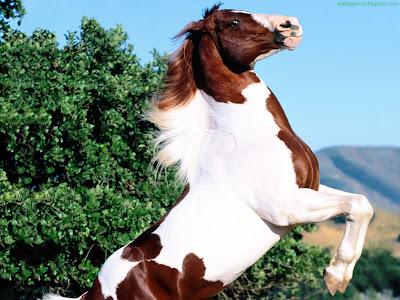 Horse Standard Resolution Wallpaper 63