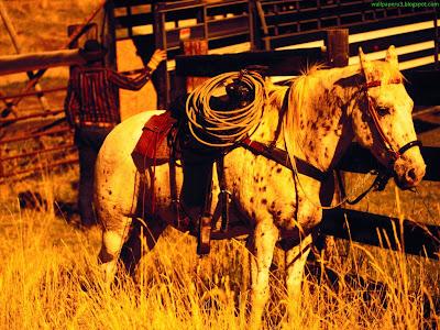 Horse Standard Resolution Wallpaper 71