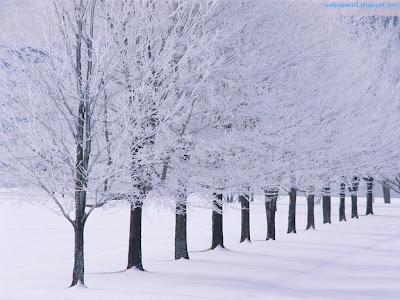 Winter Season Standard Resolution Wallpaper 22