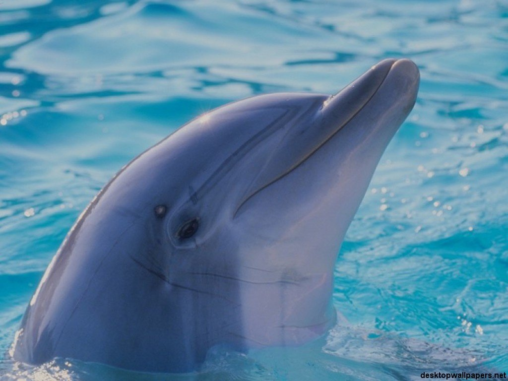 Mammals are any of the various warm-blooded vertebrate animals of the ...