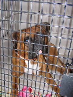 Pootie's in puppy prison!